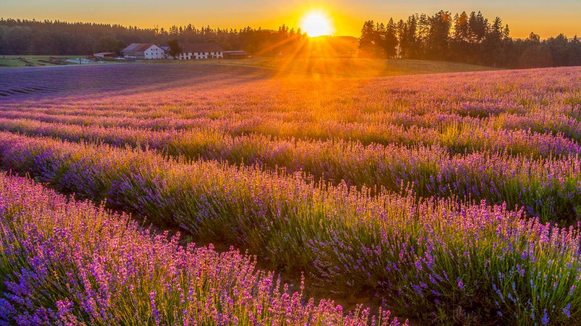 Ein Hauch von Provence